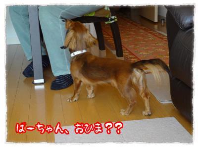 2011_11_25_6+-+繧ウ繝斐・_convert_20111125203949