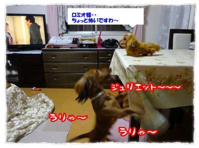 2011_12_8_3+-+繧ウ繝斐・_convert_20111208232051