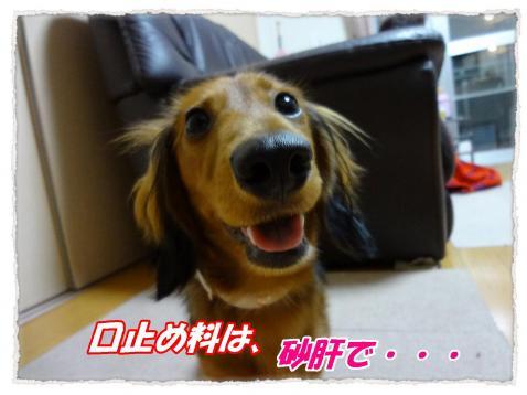 2011_10_11_6_convert_20111011184758.jpg
