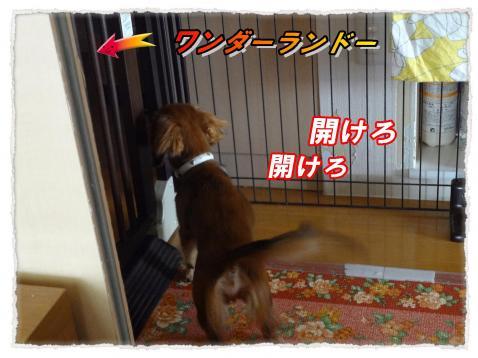 2011_10_11_7_convert_20111011184815.jpg