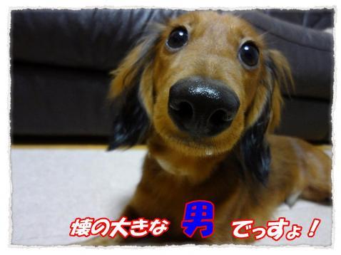 2011_10_12_2_convert_20111012192420.jpg