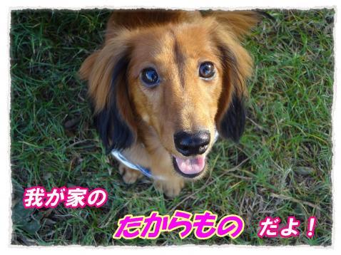 2011_10_13_5_convert_20111013145653.jpg