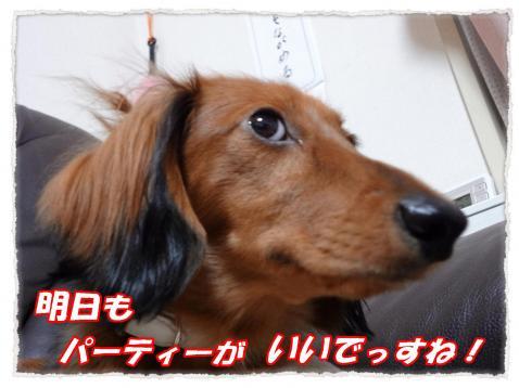 2011_10_14_10__convert_20111014203845.jpg