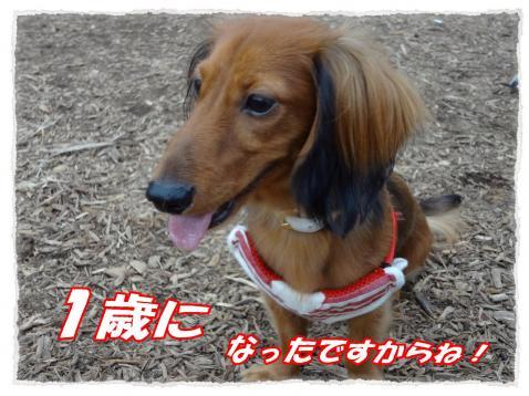 2011_10_14_1_convert_20111014203604.jpg