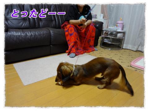 2011_10_15_3_convert_20111015231745.jpg