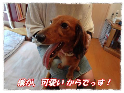 2011_10_16_2_convert_20111016231027.jpg