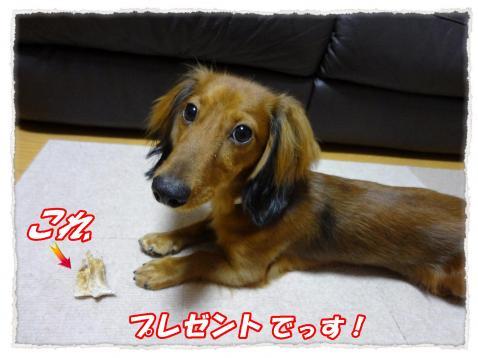 2011_10_16_4_convert_20111016231108.jpg