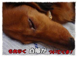2011_10_17_5_convert_20111017192608.jpg