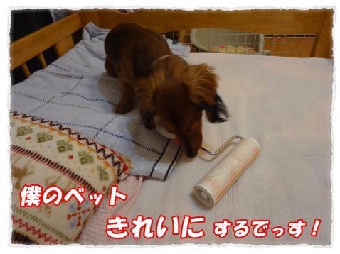 2011_10_18_5_convert_20111018222237.jpg