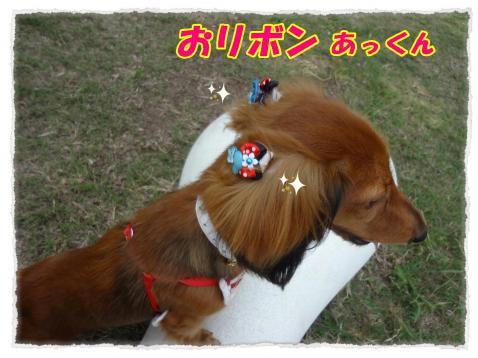 2011_10_19_1_convert_20111019190853.jpg