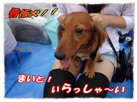 2011_10_1_2_convert_20111001221632.jpg