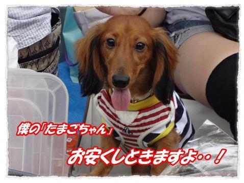 2011_10_1_4_convert_20111001221917.jpg