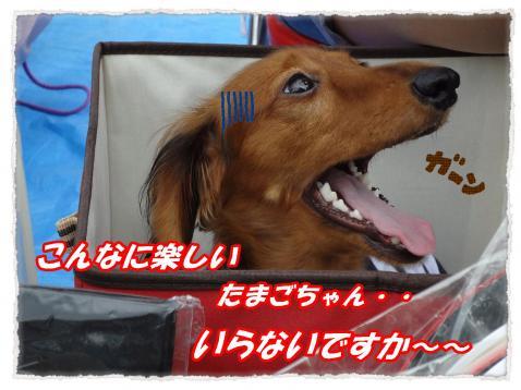 2011_10_1_5_convert_20111001221732.jpg