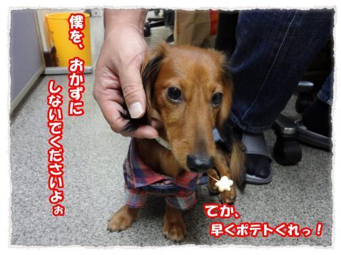2011_10_22_6_convert_20111022221654.jpg