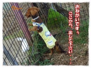 2011_10_23_2_convert_20111023223822.jpg