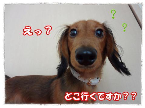 2011_10_23_3_convert_20111023223844.jpg