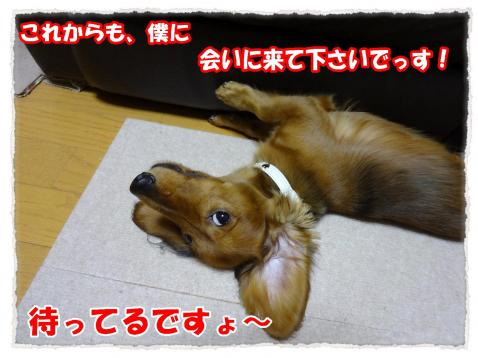 2011_10_24_8_convert_20111024173144.jpg