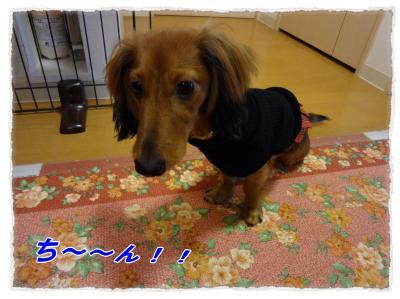 2011_10_24_9_convert_20111024173214.jpg