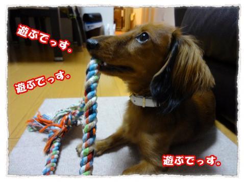 2011_10_26_4_convert_20111026181715.jpg