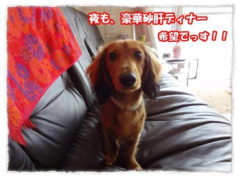 2011_10_27_5_convert_20111027175204.jpg