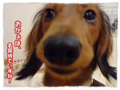 2011_10_28_13_convert_20111028215505.jpg