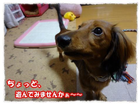 2011_10_28_1_convert_20111028181153.jpg