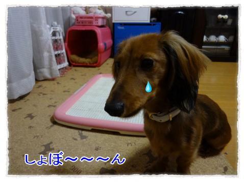 2011_10_28_2_convert_20111028181223.jpg