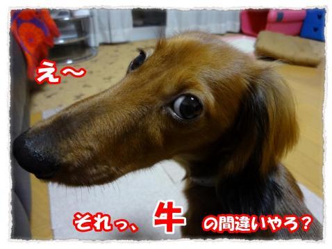 2011_10_29_1_convert_20111029221414.jpg