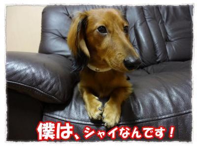 2011_10_29_2_convert_20111029221531.jpg
