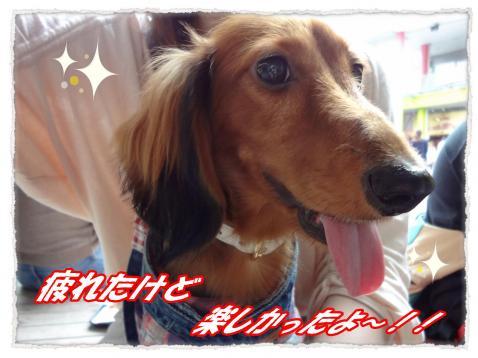 2011_10_2_10_convert_20111002230419.jpg