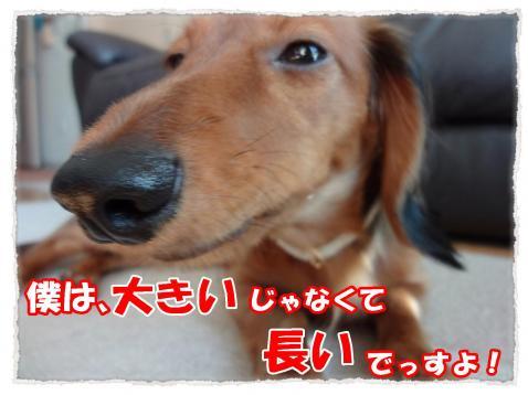 2011_10_30_11_convert_20111030203427.jpg
