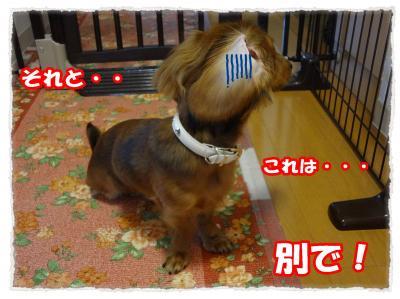 2011_10_31_7_convert_20111031181952.jpg
