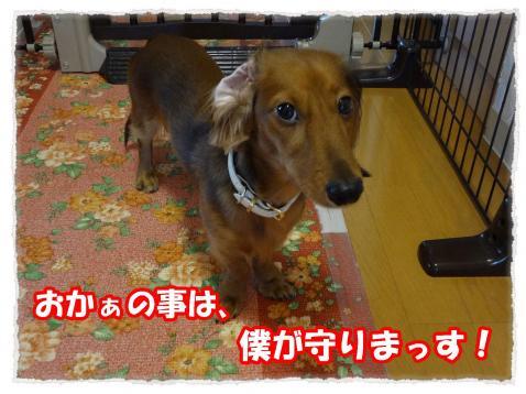 2011_10_31_8_convert_20111031182013.jpg