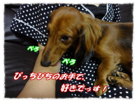 2011_10_5_2_convert_20111005224726.jpg