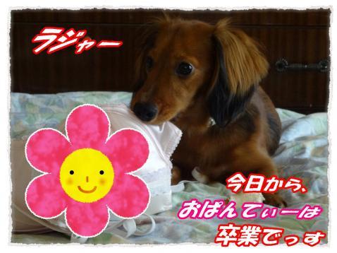 2011_10_5_5_convert_20111005224826.jpg