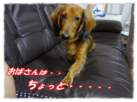2011_10_5_7_convert_20111005224904.jpg