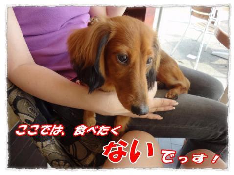 2011_10_7_2_convert_20111007164250.jpg