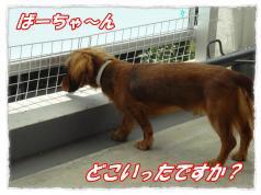 2011_10_8_2_convert_20111008211210.jpg