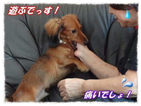 2011_10_8_5_convert_20111008221942.jpg