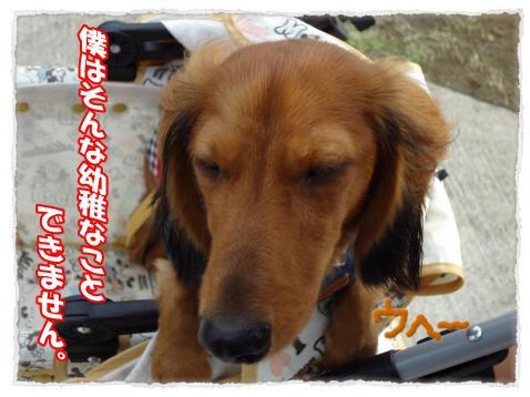2011_10_9_3_convert_20111009224537.jpg