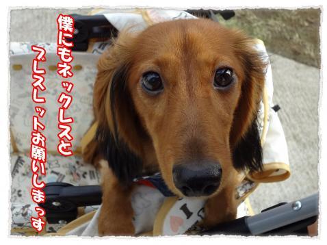 2011_10_9_7_convert_20111009224705.jpg