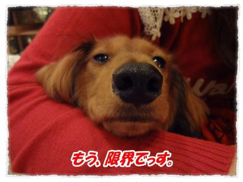 2011_10_9_9_convert_20111009224746.jpg