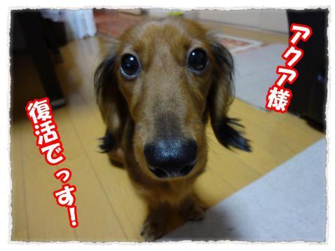 2011_11_11_11_convert_20111111223440.jpg