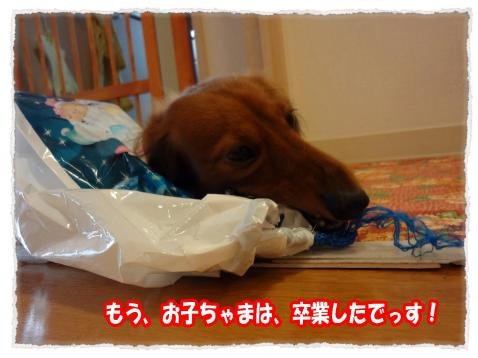 2011_11_11_1_convert_20111111195554.jpg