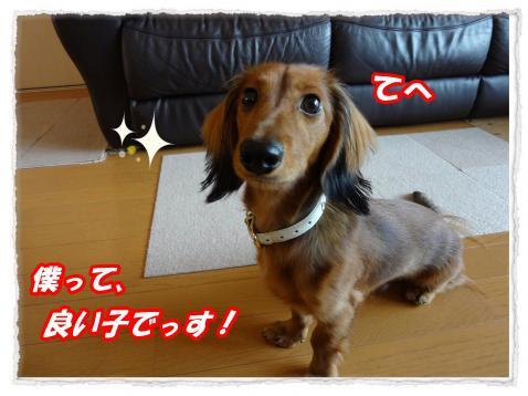 2011_11_11_2_convert_20111111195634.jpg