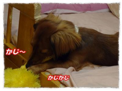 2011_11_11_4_convert_20111111195722.jpg