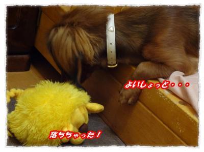 2011_11_11_5_convert_20111111195744.jpg