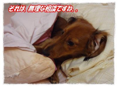 2011_11_11_6_convert_20111111195808.jpg