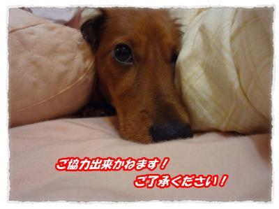 2011_11_11_7_convert_20111111195826.jpg