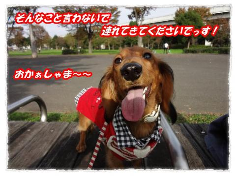 2011_11_14_9_convert_20111114225351.jpg
